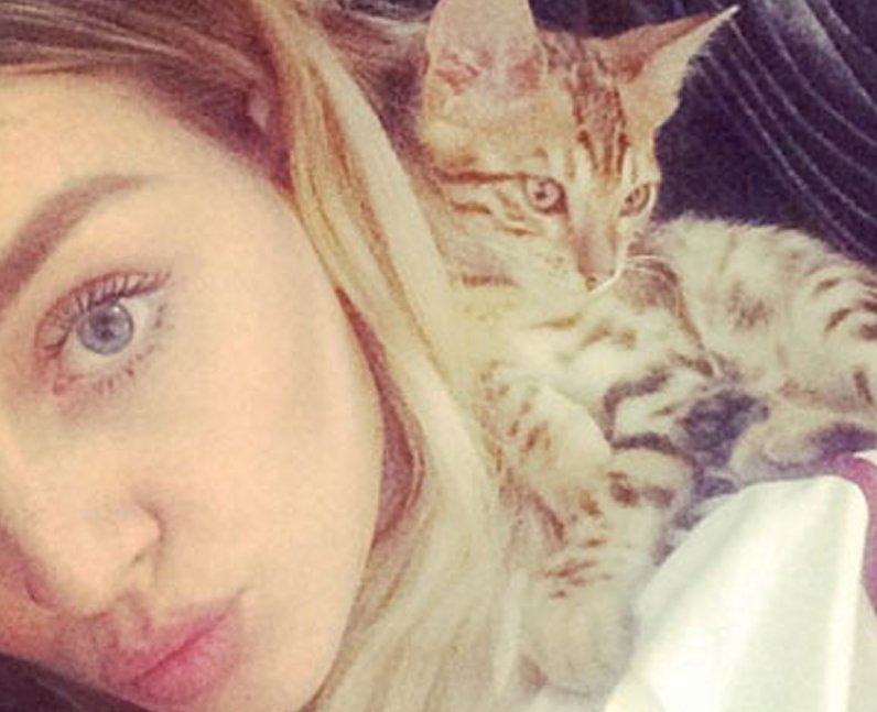 Perrie Edwards cat